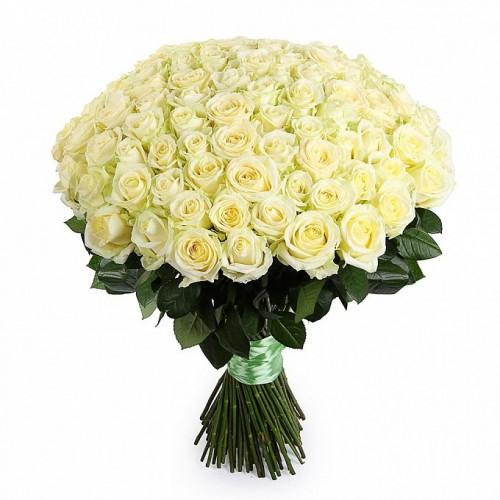 101-white-roses