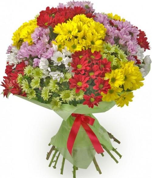 mix-crizanteme-colorate