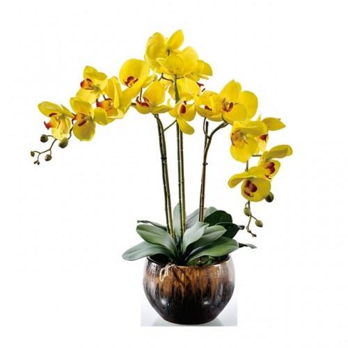 orhideie-galbena-3-crengute