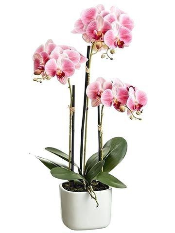orhideie-alb-roz-3-crengute