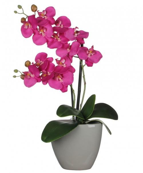 orhideie-roz-2-crengute